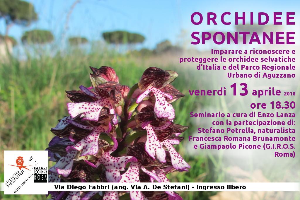 Orchidee spontanee seminario venerdì 13 aprile