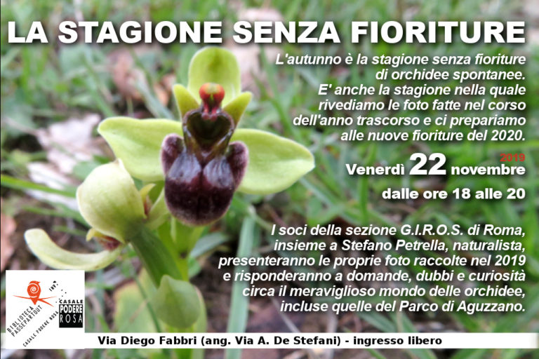 [orchidee_221119]