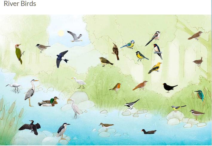 [fonte: https://coneixelriu.museudelter.cat/en/birds.php]
