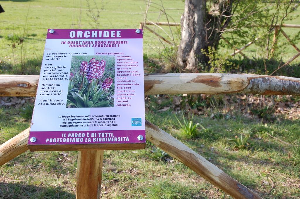 [il 'giardino' delle orchidee spontanee nel Parco di Aguzzano]